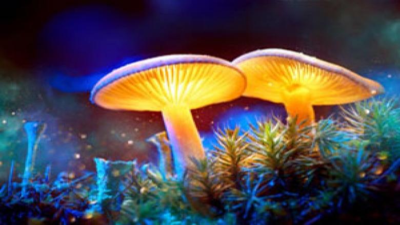تولید برق از قارچ